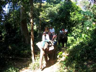 Koh Chang Jungle Trek and Elephant Ride