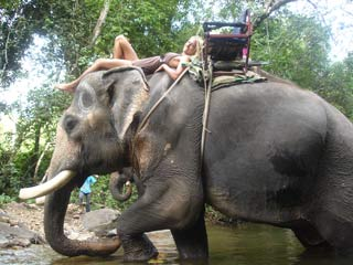 Chang Chutiman Elephant Trek Koh Chang