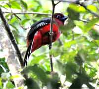 Koh Chang Bird Watching trip