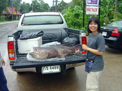 Koh Chang Fishing - 16 kilo grouper proudly displayed by Sea Hunter's Owner