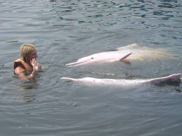 Swim with Dolphins from Koh Chang